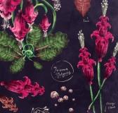 Herbarium Pernowka