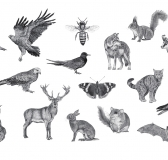 Detailed Illustrations of German Wildlife by PunktFormStrich