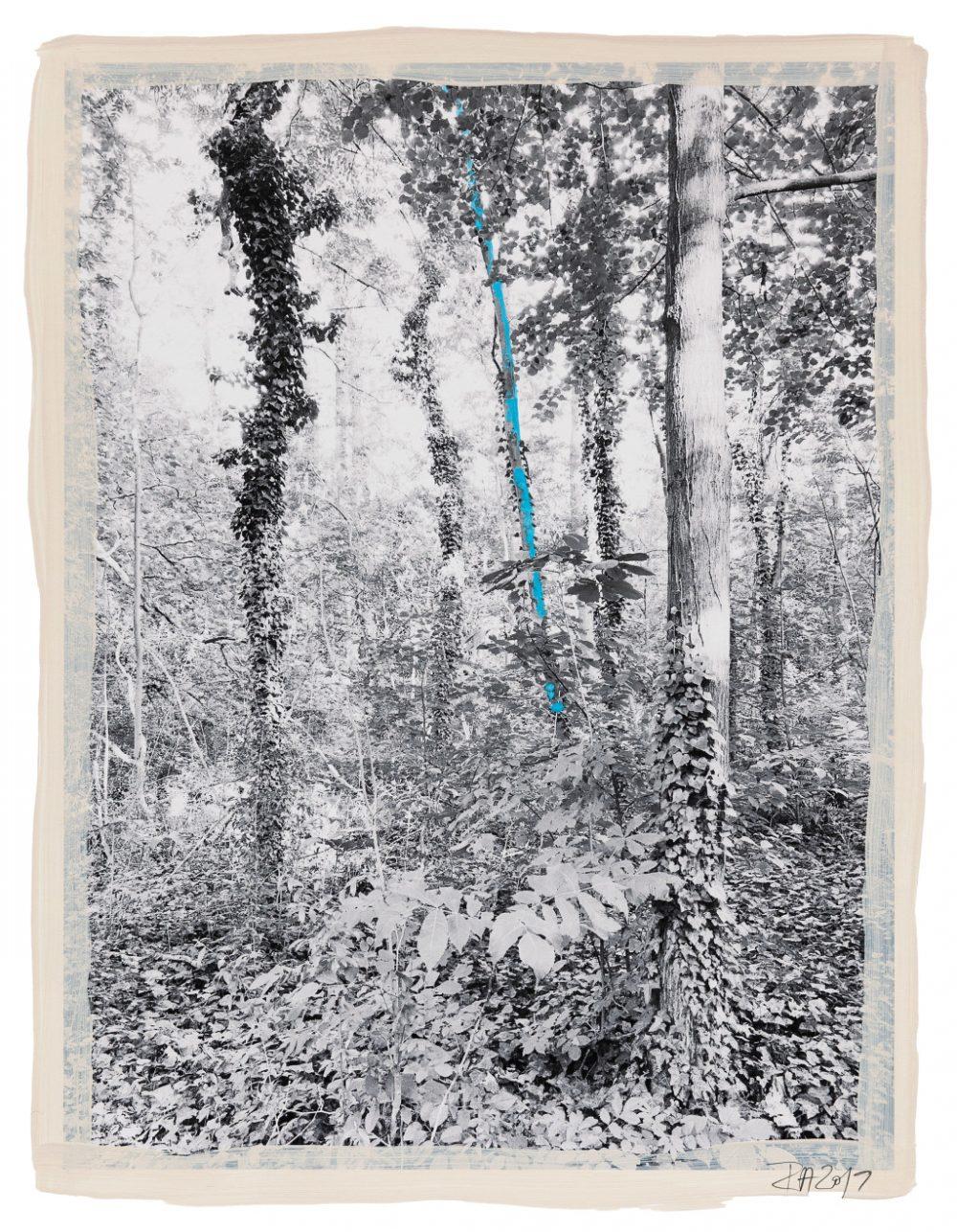 Regina Anzenbergen Shifting Roots exhibition